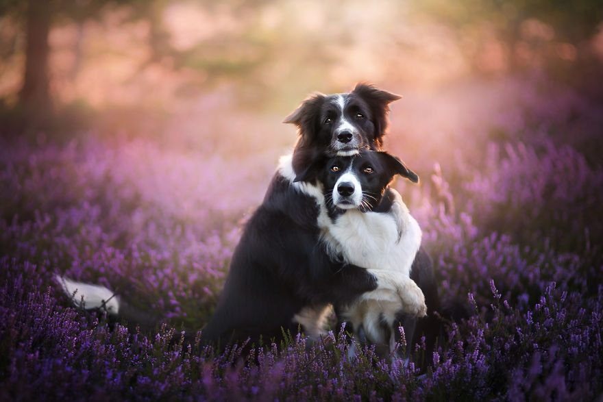 I Came Back With More Heartwarming Dog Portraits That Will Make You Smile