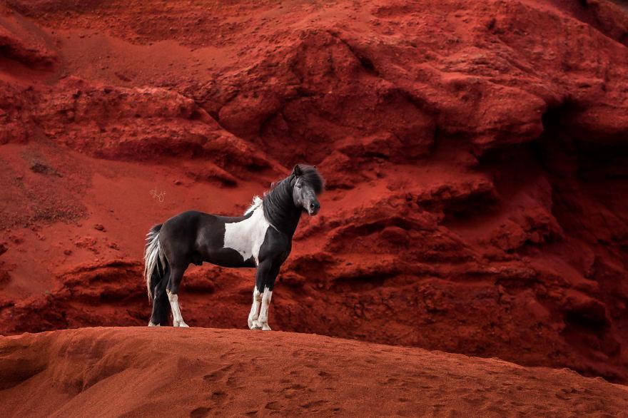 Slike prekrasnih konjeva u Islandskim pejzažima