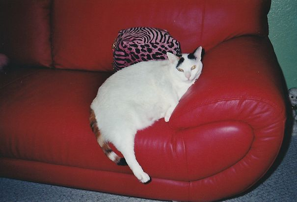 Jasmine-on-red-couch-5e8fae993fc60.jpg