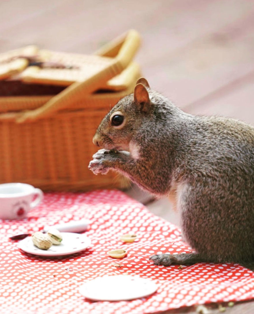 I Did A Photoshoot With A Squirrel Enjoying His Picnic