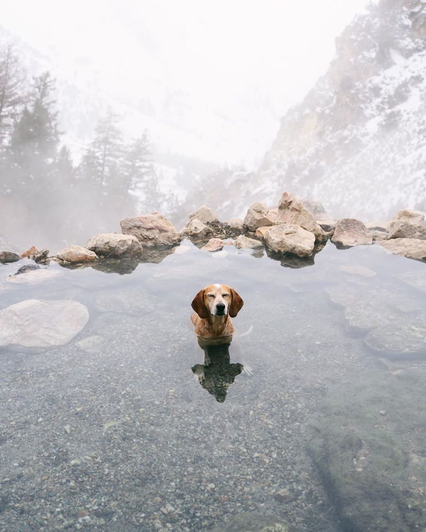 More Than 1 Million Followers Are Enchanted By The Beautiful Friendship Of This Rescued Dog With Its Owner On Instagram