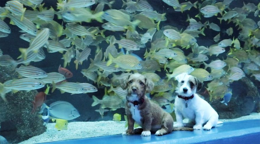 Kittens And Pups Are Introduced Into An Aquarium To Explore The Sea World