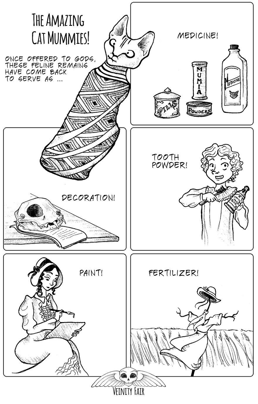 Amazing Cat Mummies!