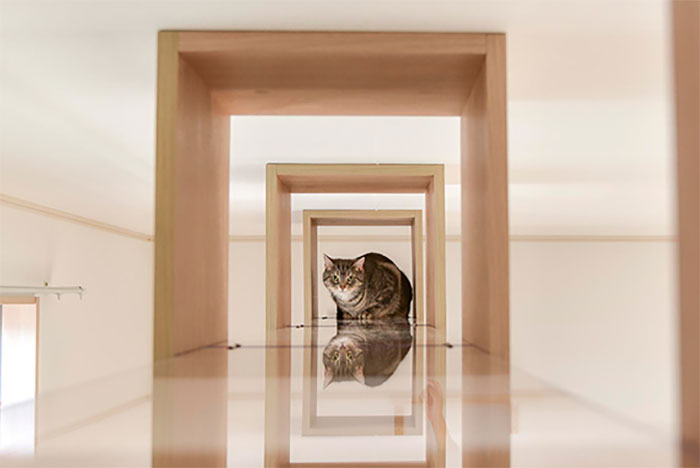 These Studio Apartments Are Dedicated To Singles Living With Cats And Their Fit Is For Maximum Feline Comfort