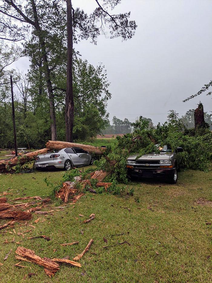 Por si la pandemia y perder nuestros trabajos no era bastante, un árbol nos ha destrozado los 2 coches