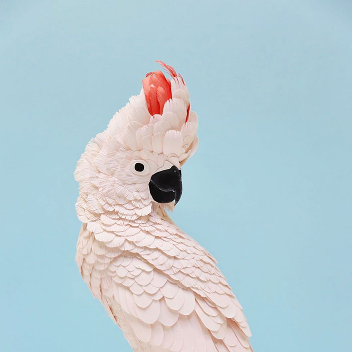 Artist Uses Paper To Recreate Bird Species All Around The World (30 Pics)