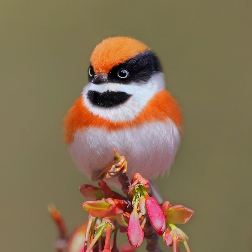 This Bird Is Called The Black-Throated Bushtit And Yes, You Read That Right (22 Pics)