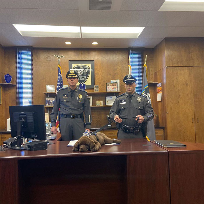 This Is Brody, The Bristol Police Therapy Dog Who Dozed Off On His Own Swearing-In Ceremony