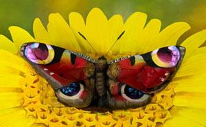 Esta mariposa es en realidad una mujer cuyo cuerpo ha sido pintado por Johannes Stötter