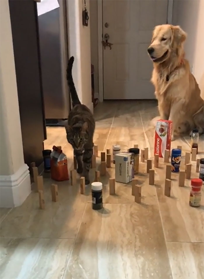 This Viral Challenge Shows How Differently Cats And Dogs Deal With Obstacles In Their Way