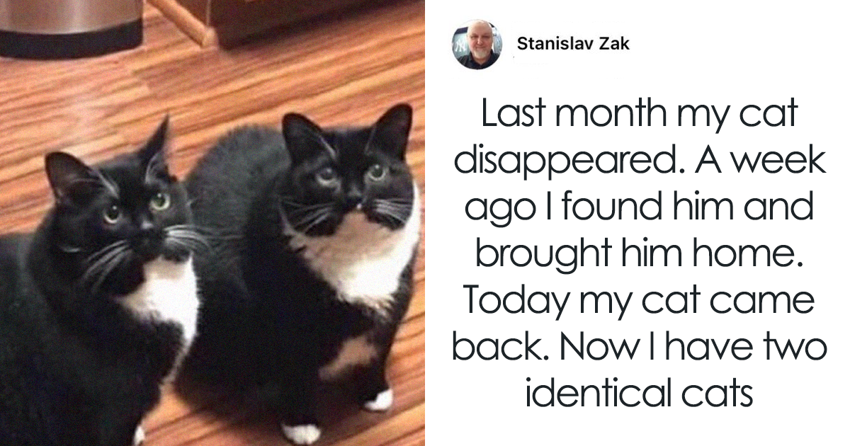 80 Hilarious Cat Snapchats That Will Put A Smile On Your Face (New Pics)