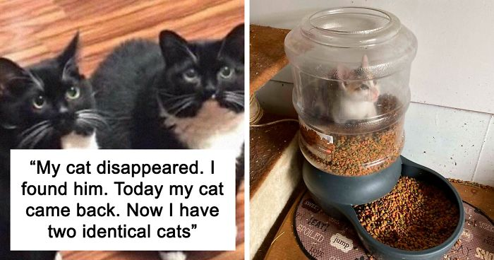 35 Hilarious Cat Snapchats That Will Put A Smile On Your Face (New Pics)