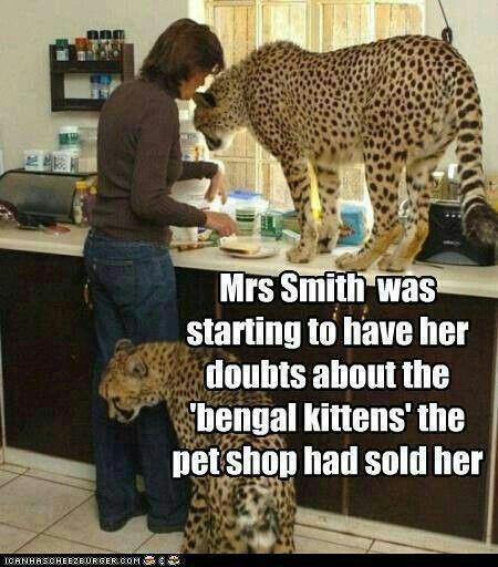 cheetah-kittens-suspect-5e95d153996a8.jpg