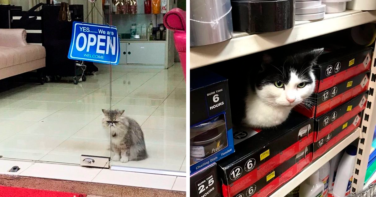 77 Cats Chilling In Convenience Stores - bored panda