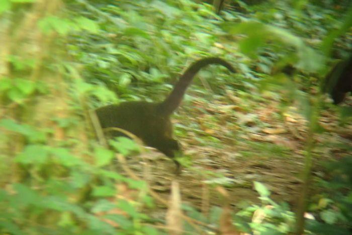 Brontosaurus Are Faaaaast
