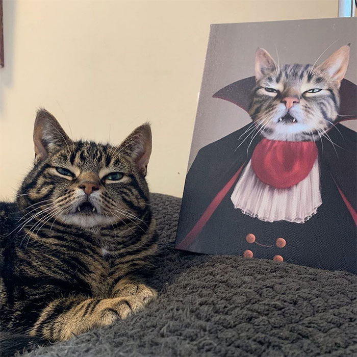 30 Pets With Royal Portraits They Deserve Made By Crown & Paw (New Pics)