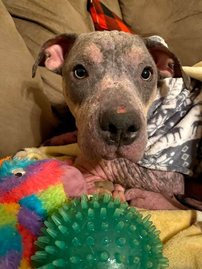 """""""She Stunk, She Couldn't See, And She Bled All Over The Couch"""": Kind People Save A Dying Dog And Her Transformation Is Incredible"""