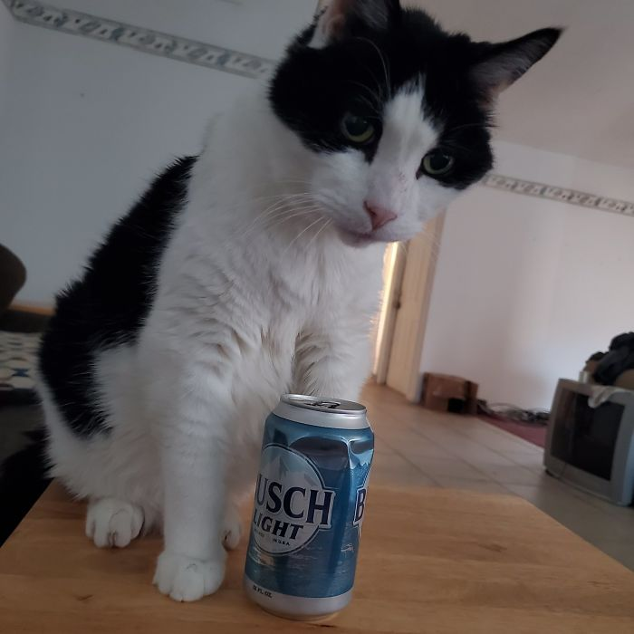 Drunk-Guy-At-The-End-Of-The-Bar-Pets