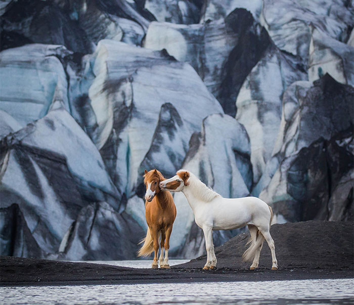 I Photograph Horses In Breathtaking Icelandic Landscapes (30 Pics)