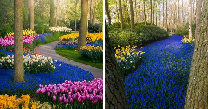 The Most Beautiful Flower Garden In The World Has No Visitors For