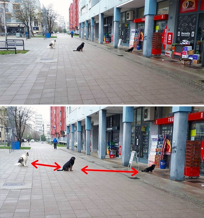 Dogs Keeping Social Distance In Zagreb