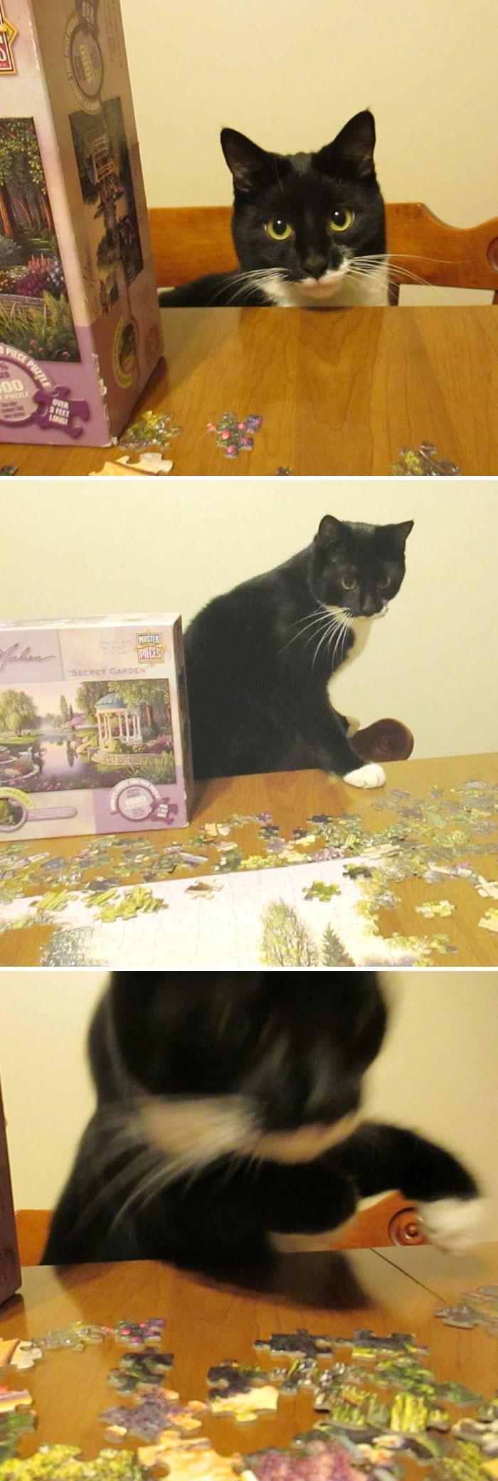 Cat Versus Puzzle