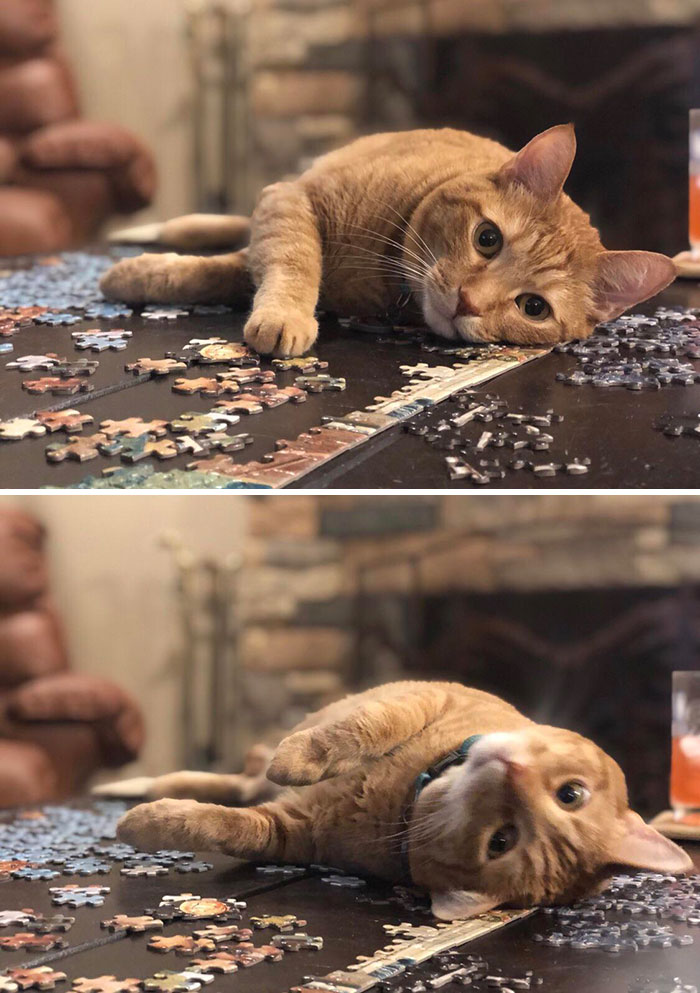 The Reason Why It Takes Us Forever To Finish A Puzzle
