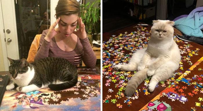 30 Fotos que muestran la realidad de intentar hacer un puzzle con tu gato