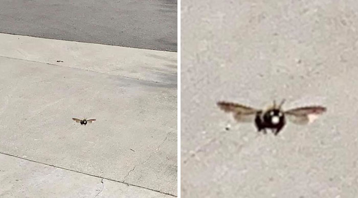 Noticed A Carpenter Bee Following Me While I Was Doing Yard Work Today, So I Decided To Take A Picture