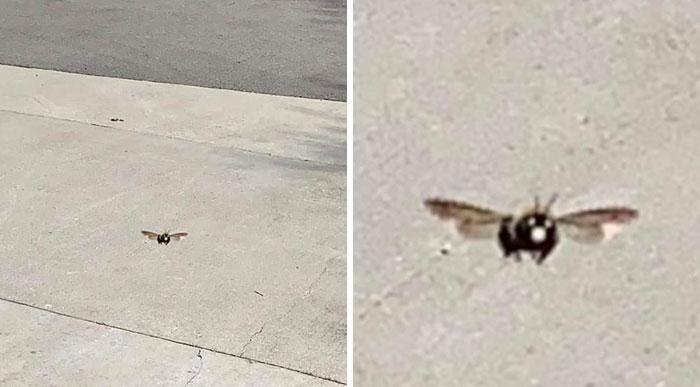 Vi una abeja carpintera e intenté hacerle una foto