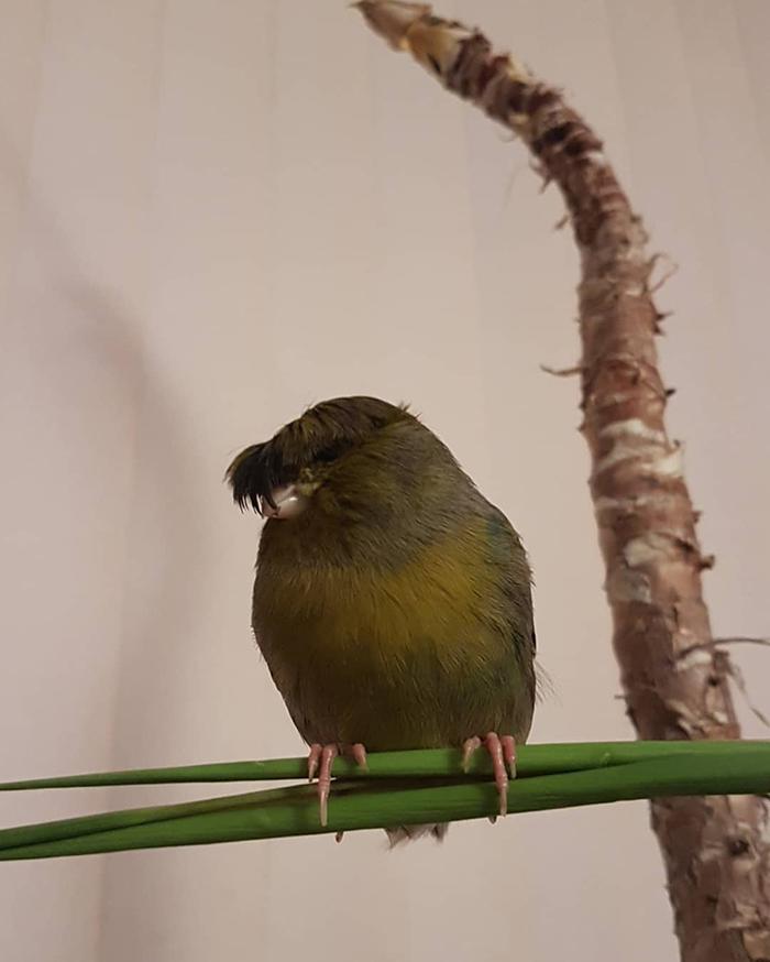 Barry The Bird With Hair