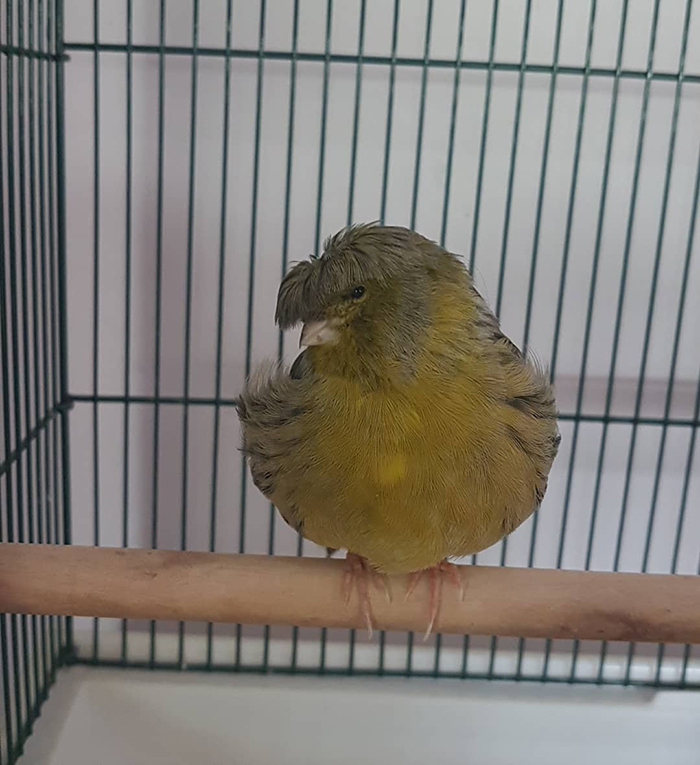 Just Cute Bird Things