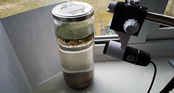 Guy Places A Jar Full Of Pond Water On The Windowsill, Records It On Camera As It Comes Alive