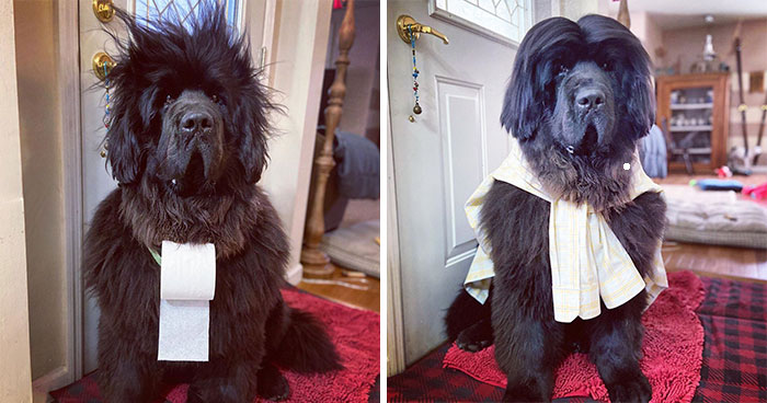 Owner Does Her Dog's Hair Every Day Since The Lockdown Started And People Can't Wait To See What The Next Day Will Bring