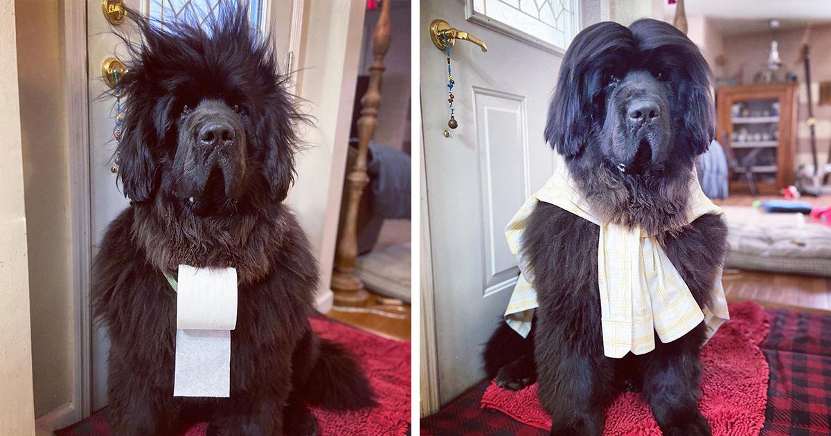 Hank Gets A New Hairdo Every Day In Quarantine (17 Pics) - bored panda