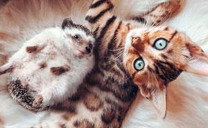 A todos les encantan las aventuras de este erizo y su mejor amigo, un gato de Bengala (30 fotos)