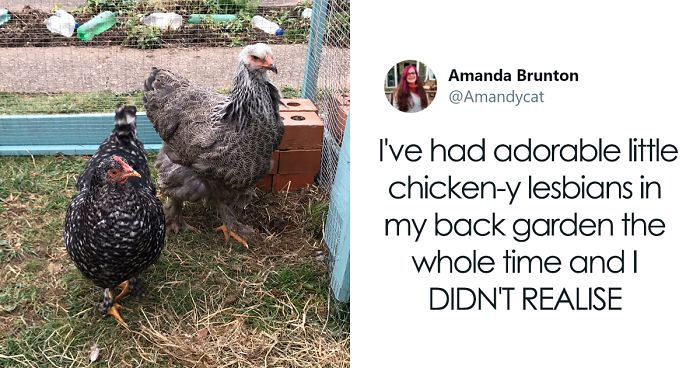 Woman Shares How She Realized Her Two Hens Were In A Lesbian Relationship In An Entertaining Thread
