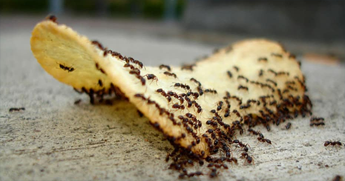 This Facebook Group Is Dedicated To People Pretending To Be Ants