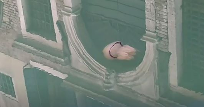 Biologist Captures Jellyfish Swimming Through Venice's Crystal Clear Canals