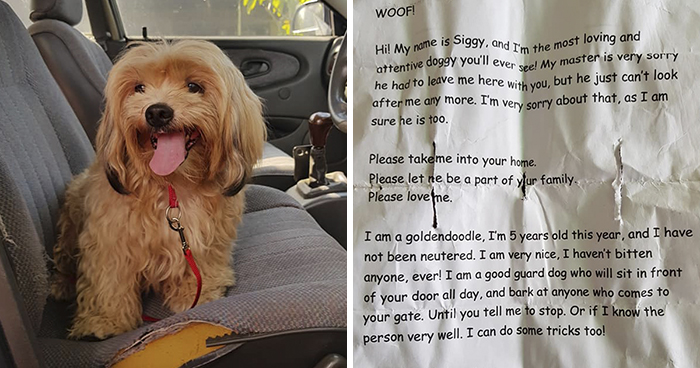 Man Left In Tears After Discovering The Note Tucked Behind Abandoned Dog's Collar