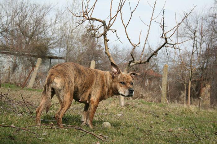 Dog Has Horns