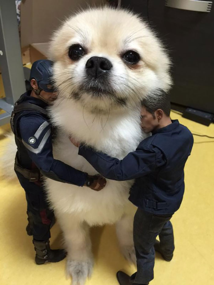 Nothing Like Hugging A Giant Pooch!