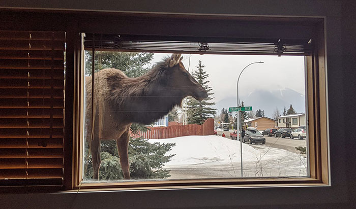 Insanely Popular Online Group Has People Sharing Their 'View From My Window' And Here Are The 40 Best Submissions