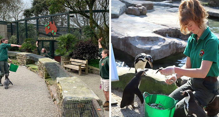 In Order To Continue Taking Care Of Animals, 4 Zookeepers Choose To Self-Quarantine Inside A Zoo