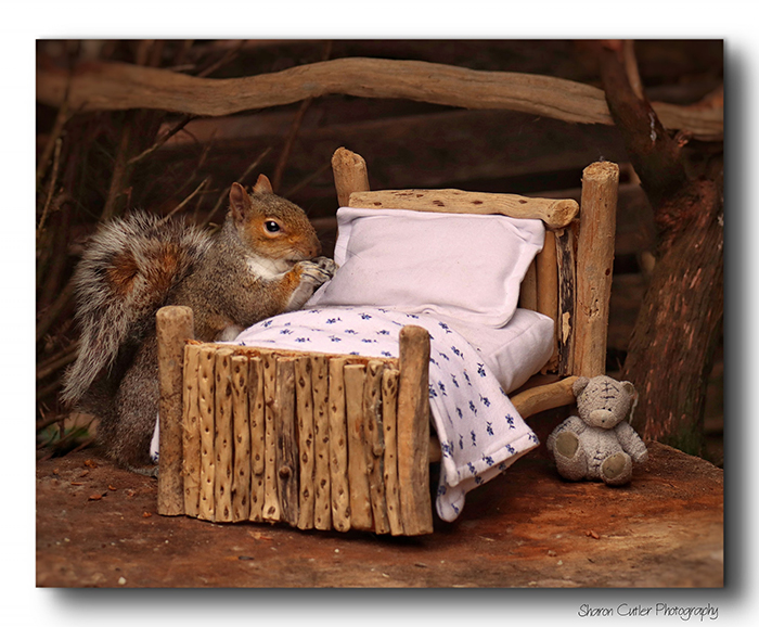 Photographer Makes A Tiny Bed For A Squirrel That Frequents Her Garden, Snaps These 11 Cute Pictures