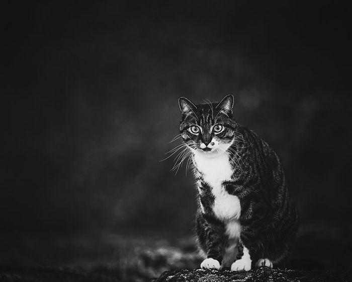 Woman Buys Her Cat A Professional Photoshoot, Has Zero Regrets (17 Pics)