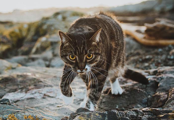 Esta mujer pagó una sesión de fotos profesional para su gato, y no se arrepiente de nada (17 fotos)