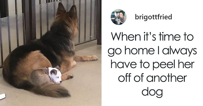 This Dog Has Befriended The Fluffiest Pooches At Day Care So She Could Use Them As Pillows