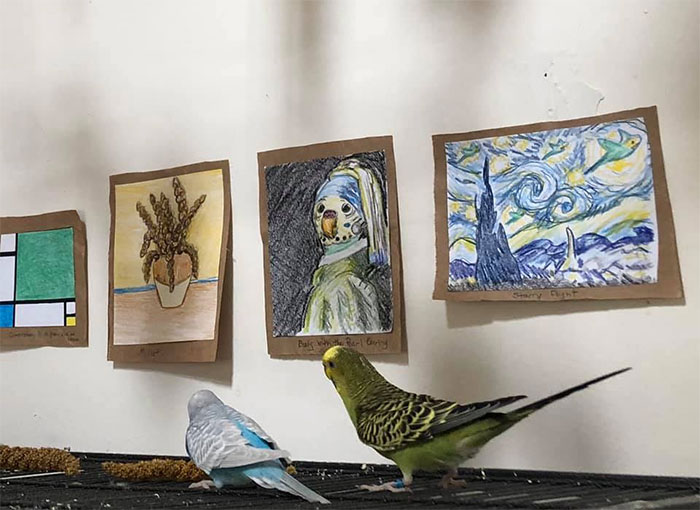 My Friend Created A Tiny Art Gallery For Her 7 Budgies