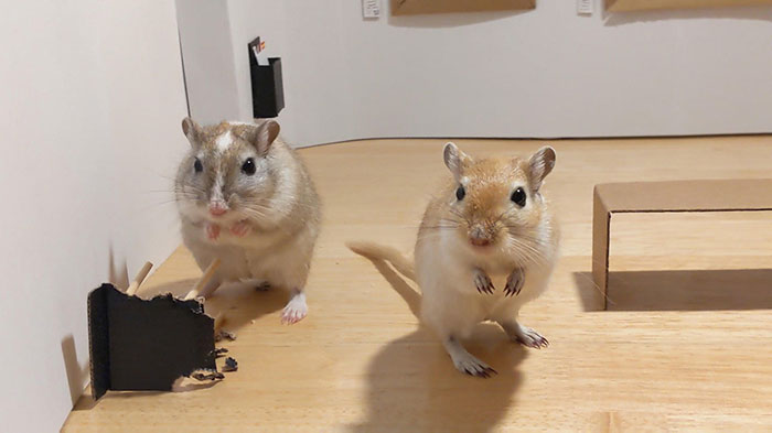 Quarantined Couple Creates A Miniature Art Gallery For Their Gerbils With Iconic Paintings